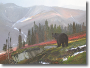 Black Bear by Nicholas Coleman