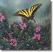 Original Painting, Swallowtail Butterfly and Pink Mountain Heather by Dimitri Danish